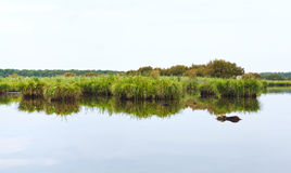 Flat landsacape of Briere Marsh, France Royalty Free Stock Photography