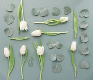 Composed leaves and flowers from above. Flat lay of arranged white tulips with green stems and pale leaves royalty free stock photo