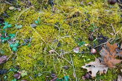 Flat lay background texture mix of bright green moss covering black soil, some green clover plants, autumn field. Detail royalty free stock images