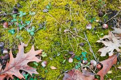 Flat lay background texture mix of bright green moss covering black soil, some green clover plants. Natural mess stock image
