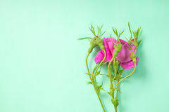 Flat lay of beautiful romantic pink rose flower with buds on gre. En background, close up Royalty Free Stock Photo