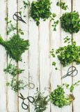 Various fresh green kitchen herbs over wooden background, copy space Royalty Free Stock Image