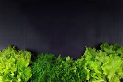 Flat-lay of bunches of various fresh green kitchen herbs. Parsle. Border . Spinach, dill, coriander, parsley, lettuce. Fresh green on a dark wooden background Royalty Free Stock Image