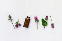 Flat lay burdock Essential oil In small bottle. Spikes of flowers and leaves on a white background.  royalty free stock photography