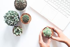 Flat lay of cactus and succulent with woman hand and laptop computer on white background, Love the earth. Concept Stock Photos