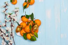 Flat lay Chinese new year tangerine oranges and plum blossoms on Royalty Free Stock Images