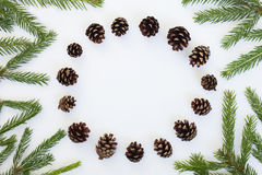 Flat lay chrismas round frame with fir branches and pine cones. Winter background on white with fir branches and pine cones Stock Images