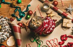 Flat-lay of Christmas decorations and cat in red winter sweater stock image