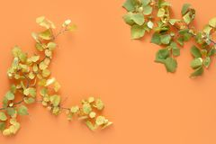 Flat lay colorful autumn leaves orange background Autumn fall top view. Flat lay colorful autumn leaves on orange background. Autumn, fall concept. top view royalty free stock images