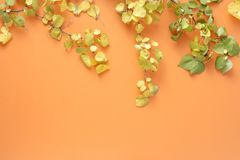 Flat lay colorful autumn leaves orange background Autumn fall top view. Flat lay colorful autumn leaves on orange background. Autumn, fall concept. top view stock images