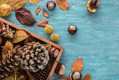 Flat lay composition for autumn holidays greeting cards. Pine cones, oak branches, acorns, leaves, chestnuts in a wooden box on th Stock Photos