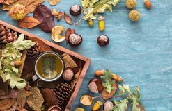 Flat lay composition for autumn holidays greeting cards. Pine cones, oak branches, cup of tea, acorns, leaves, chestnuts in a wood stock images