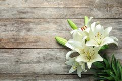 Flat lay composition with beautiful blooming lily flowers royalty free stock images