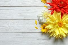 Flat lay composition with beautiful dahlia flowers and space for text. On wooden background royalty free stock images