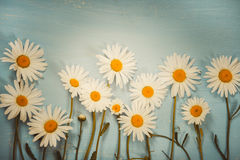 Flat lay composition with chamomiles flowers Royalty Free Stock Photo