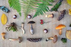 Flat lay composition of edible forest mushrooms, leaves, conkers and cones Stock Image