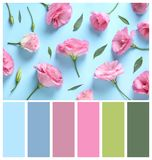 Flat lay composition with eustoma flowers and green leaves on blue background. Natural color palette for interior. Or fashion design and art stock photography