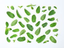 Flat lay composition with fresh mint leaves on white background. Flat lay composition with fresh green mint leaves on white background Stock Image