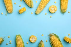 Flat lay composition with tasty sweet corn cobs o. N color background royalty free stock photo