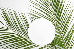 Flat lay composition with tropical date palm leaves. On white background royalty free stock photography