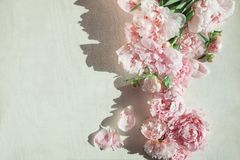 Flat lay concept with beautiful peonies on white wood Royalty Free Stock Images