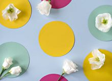 Flat lay concept with elegant flowers. Flat lay concept with elegant flowers on multicolored pastel background Royalty Free Stock Photography