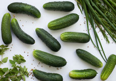 Flat lay with cucumbers and greenery. Green and white backgroung with cucumbers and greenery. Pickels concept Stock Photography