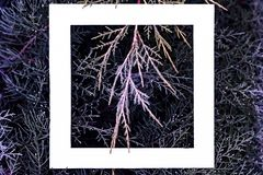 Flat lay of fantastic magic blue magenta pink color pine wood branches background with white frame on top with copy space f. Flat lay of fantastic magic blue stock photo