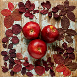 Flat lay frame of autumn crimson leaves with apples on a blue wo Stock Images