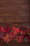 Flat lay frame of autumn crimson leaves on a dark wooden backgro Royalty Free Stock Photos