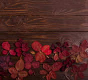 Flat lay frame of autumn crimson leaves on a dark wooden backgro Stock Photo