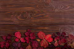 Flat lay frame of autumn crimson leaves on a dark wooden backgro Stock Photos