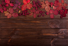 Flat lay frame of autumn crimson leaves on a dark wooden backgro Royalty Free Stock Photo