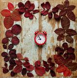 Flat lay frame of autumn crimson leaves with red alarm clock on Stock Images