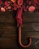 Flat lay frame of autumn crimson leaves and umbrella burgundy co Stock Image
