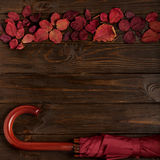 Flat lay frame of autumn crimson leaves and umbrella burgundy co Royalty Free Stock Image