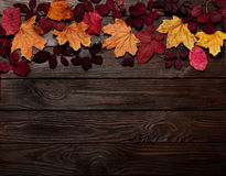 Flat lay frame of autumn crimson and yellow leaves on a dark woo Royalty Free Stock Photos