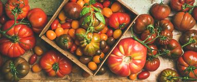 Flat -lay of fresh colorful tomatoes variety Stock Photography