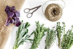 Flat lay with fresh herbs and greenery for drying and making spices set on white kitchen background pattern Stock Image