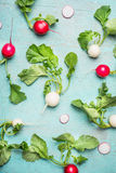 Flat lay of Fresh radishes harvest from garden. Top view Stock Photography