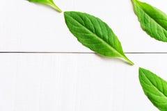 Flat lay green leaf on white wood background Stock Photo