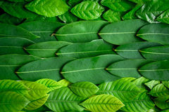 Flat lay green leaf on white wood background Stock Photos