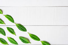 Flat lay green leaf on white wood background Royalty Free Stock Image