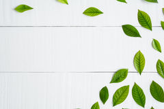 Flat lay green leaf on white wood background Royalty Free Stock Photo