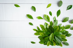 Flat lay green leaf on white wood background Stock Photography
