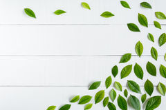 Flat lay green leaf on white wood background Stock Images