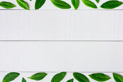 Flat lay green leaf on white wood background Royalty Free Stock Photos