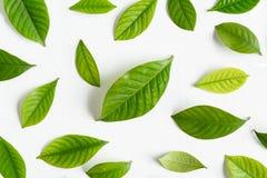 Flat lay green leaf on white wood background Stock Image