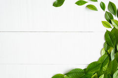 Flat lay green leaf on white wood background Royalty Free Stock Photography