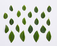 Flat lay. Green leaves pattern Stock Image